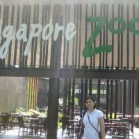 SINGAPORE ZOO AND RIVER SAFARI- NIGHT SAFARI