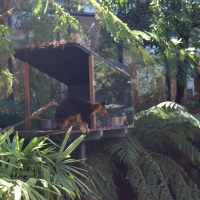 FUN & EXCITEMENT AT TARONGA ZOO: SYDNEY