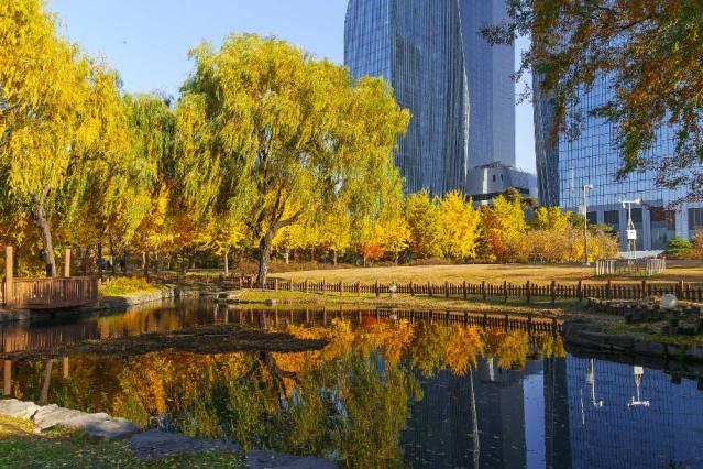 autumn-yeouido-park-seoul-korea