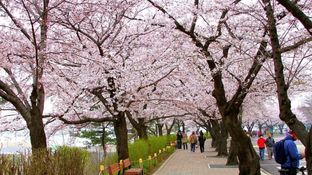 best-time-to-visit_seoul-travel-
